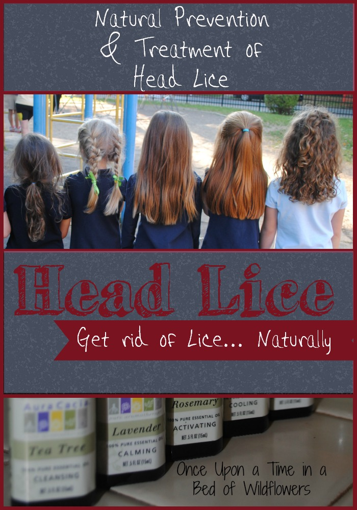 how to get ride of lice