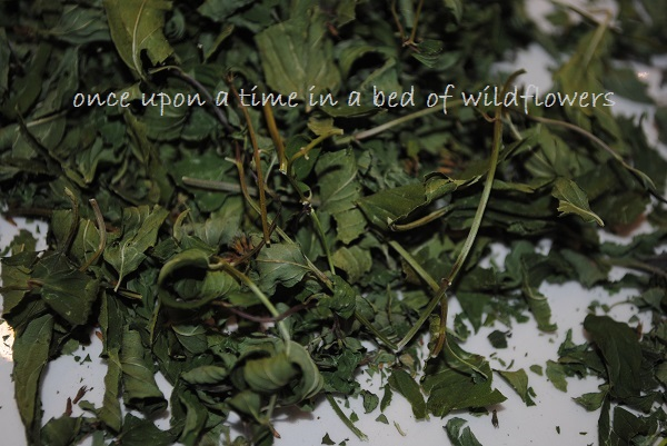 Dried Mint | Once Upon a Time in a Bed of Wildflowers