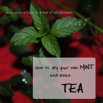How to dry your own Mint and make Tea | Once Upon a Time in a Bed of Wildflowers
