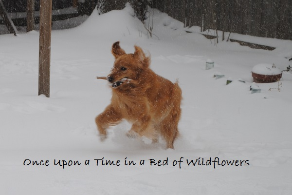 The Dog and her Stick / My Week on Wednesday / Once Upon a Time in a Bed of Wildflowers