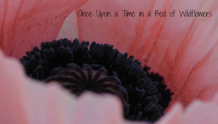 Thousand Word Thursday // Poppies // Once Upon a Time in a Bed of Wildflowers