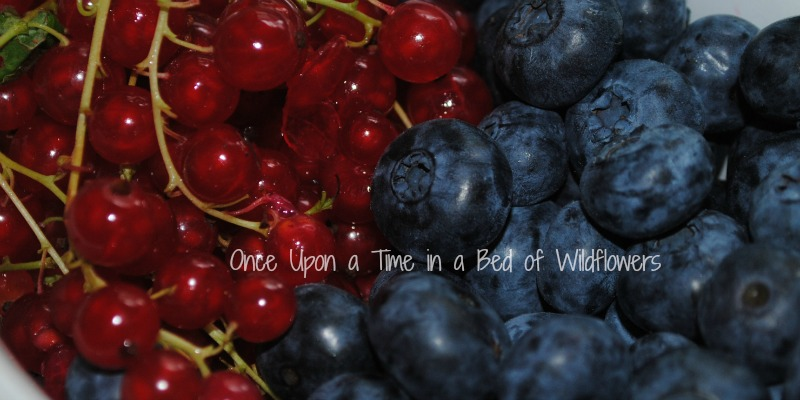 blueberries and currants for jam // Once Upon a Time in a Bed of WIldflowers
