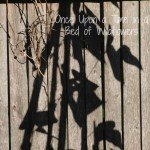 Thousand Word Thursday // Bean Shadows // Once Upon a Time in a Bed of Wildflowers