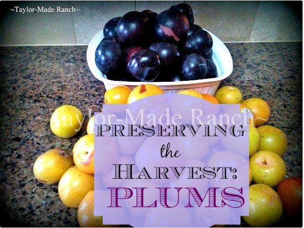 taylor made plums