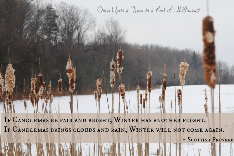 Imbolc / Once Upon a Time in a Bed of Wildflowers