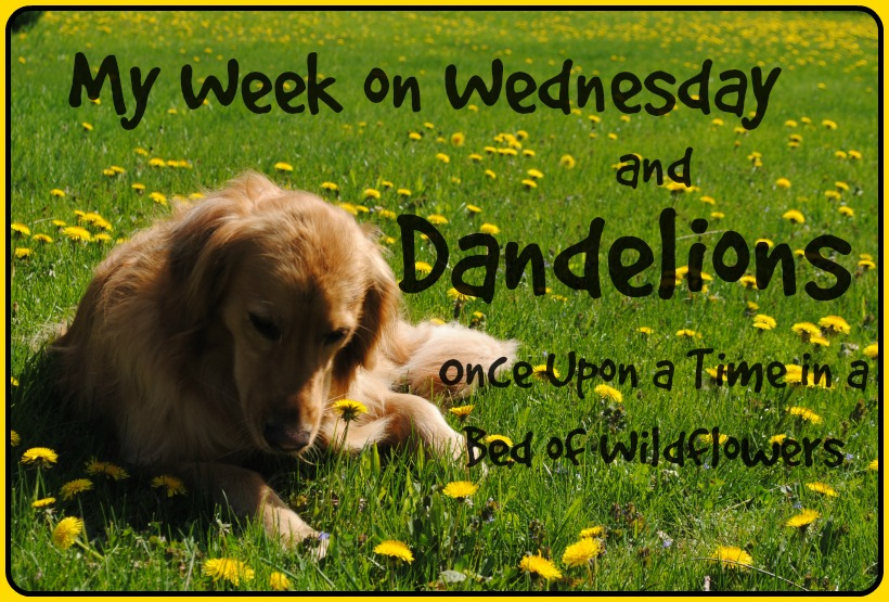 My Week on Wednesday and Dandelions // Once Upon a Time in a Bed of Wildflowers -- abandon the winter weather and check out all the benefits of dandelions!