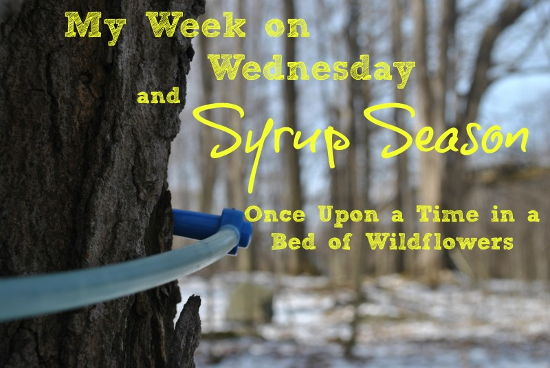 Syrup Season and My Week on Wednesday // Once Upon a Time in a Bed of Wildflowers