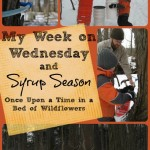 Are you interested in learning how to tap your trees for syrup? Did you know that other trees (besides maple) can be used? This is a great collection of posts that will tell you everything you need for SYRUP SEASON from Once Upon a Time in a Bed of Wildflower's My Week on Wednesday Post