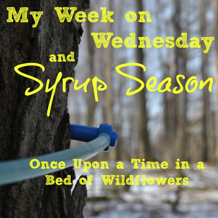 Syrup Season sq