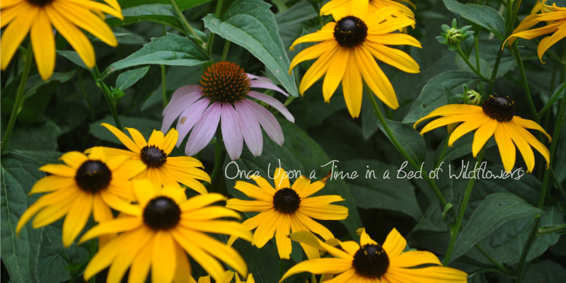 photo credit: Once Upon a Time in a Bed of Wildflowers