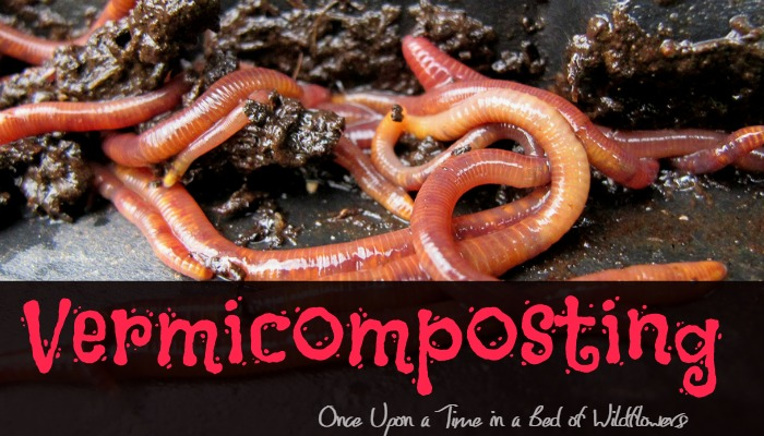 Vermicomposting via Once Upon a Time in a Bed of WIldflowers