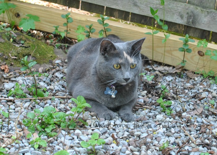 From the Farm Blog Hop // Isis in the Garden