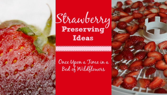 Ways to Preserve Strawberries, plus growing tips and 26 amazing strawberry recipes from Once Upon a Time in a Bed of Wildflowers