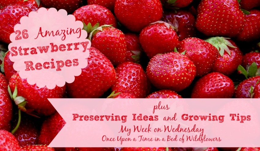 26 Amazing Strawberry Recipes, plus preserving ideas and growing tips: The Ultimate Strawberry Round Up from Once Upon a Time in a Bed of Wildflowers