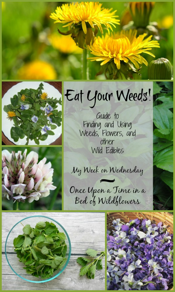 Eat Your Weeds! A guide to finding and using weeds, flowers, and other wild edibles. A My Week on Wednesday post from Once Upon a Time in a Bed of Wildflowers