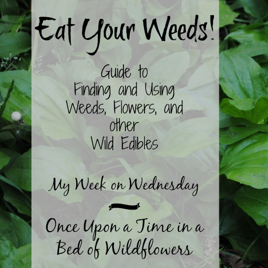 Eat Your Weeds sq