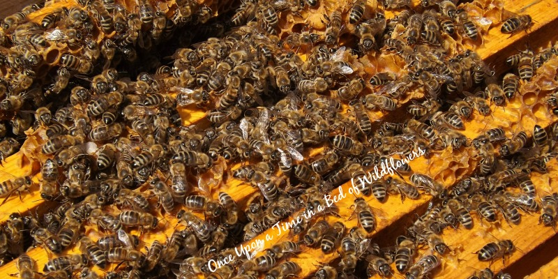 What you need to know to add bees to your homestead // Once Upon a Time in a Bed of Wildflowers