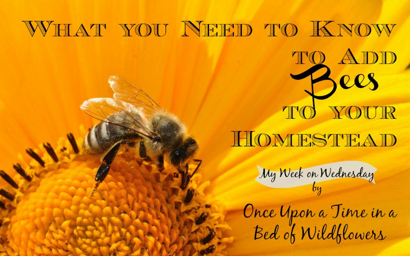 Have you ever considered adding bees to your homestead? Learn why it might be a good choice for you, plus what you need to go to get started and other bee-friendly options if you ultimately decide bees aren't right for you.