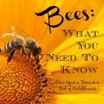 Bees sq