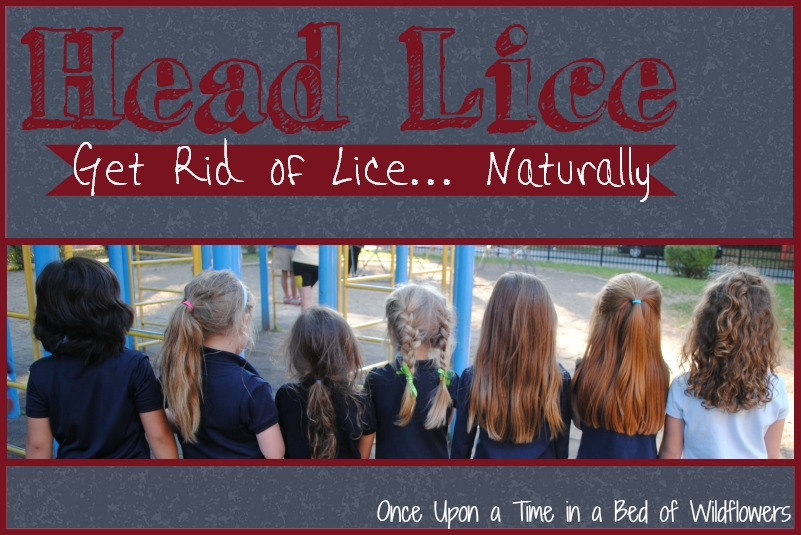 What can you use to get rid of hair lice hair models 2017 how to get rid of lice naturally once upon a time in bed ccuart Choice Image