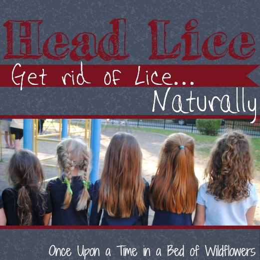 get rid of lice sq1