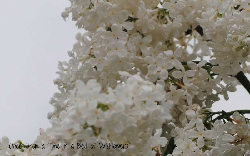 Thousand Word Thursday // Once Upon a Time in a Bed of Wildflowers