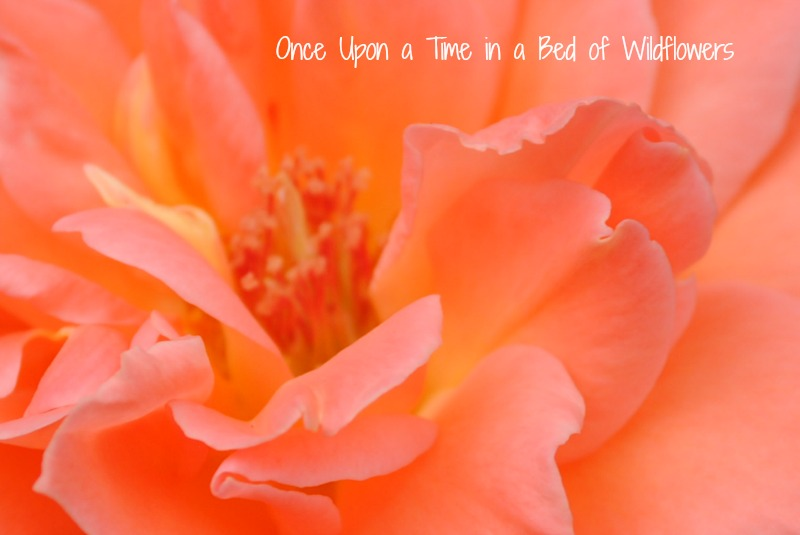 Georgia Rose // Thousand Word Thursday // Once Upon a Time in a Bed of Wildflower
