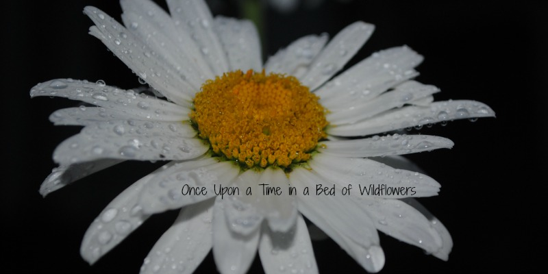 via Once Upon a Time in a Bed of Wildflowers