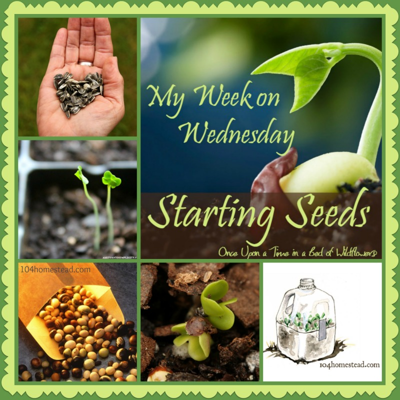 My Week on Wednesday and Starting Seeds -- a collection of everything you need to know to start seeds for your garden this year, as well as info on finding and saving seeds // Once Upon a Time in a Bed of Wildflowers